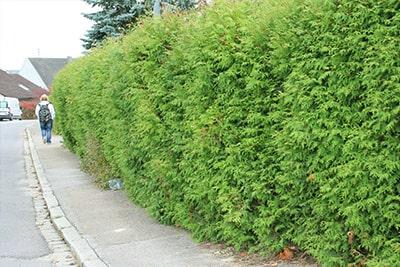 Solución Mantención de Arbustos y Arbolado - EAX - Problema