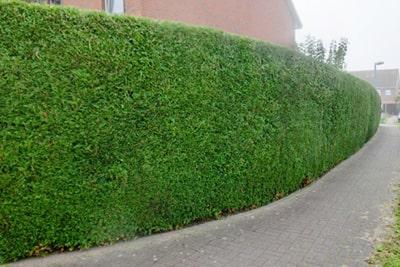 Solución Mantención de Arbustos y Arbolado - EAX