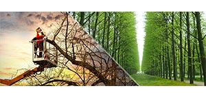 solucion_mantencion-arbustos-arbolado
